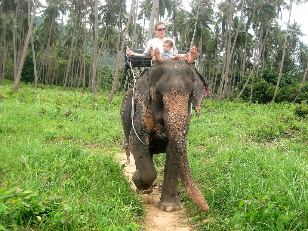 Koh Samui Elephant Ride